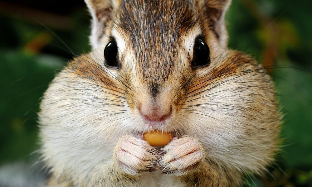 scoiattoli-noce-fluoro